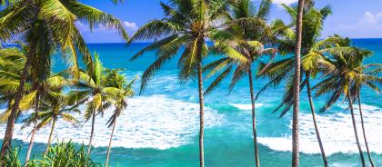 Виза на Шри-Ланку снова стала платной